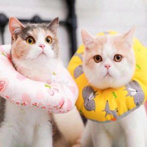 COLLAR DE RECUPERACIÓN PARA GATOS parceros felinos